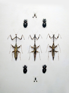 Beetles and Praying Mantis