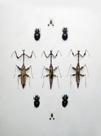 Beetles and Praying Mantis