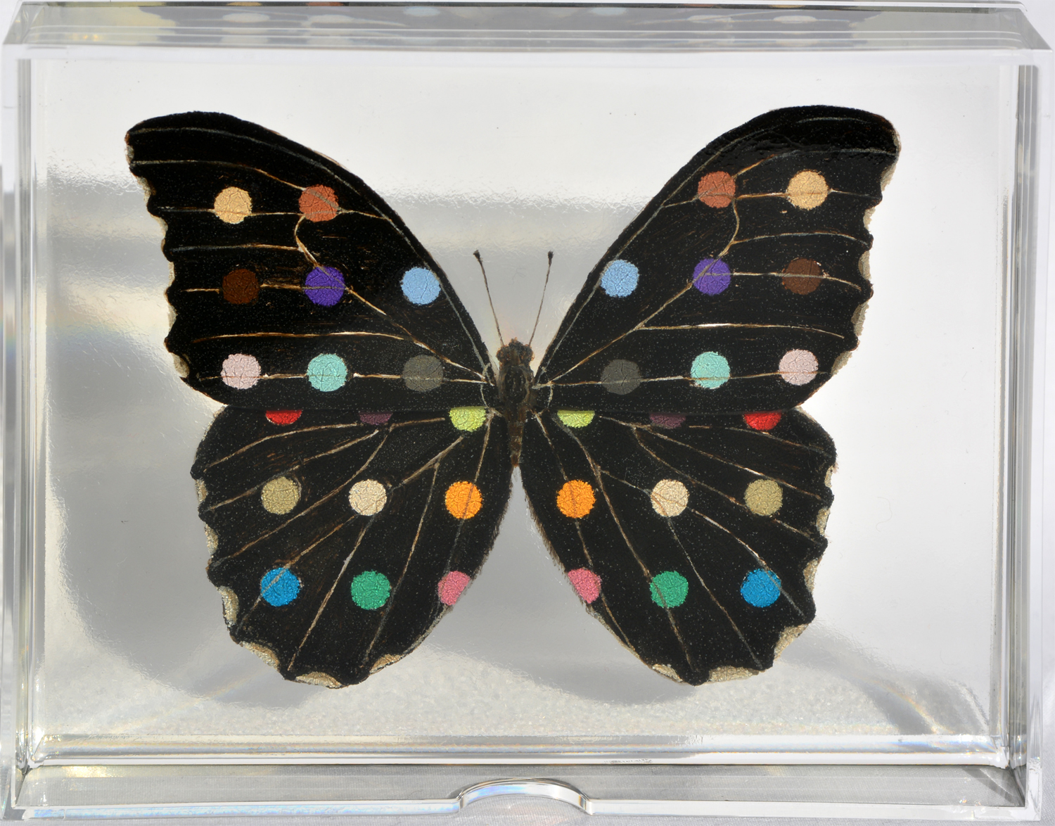 Spotted black Butterfly