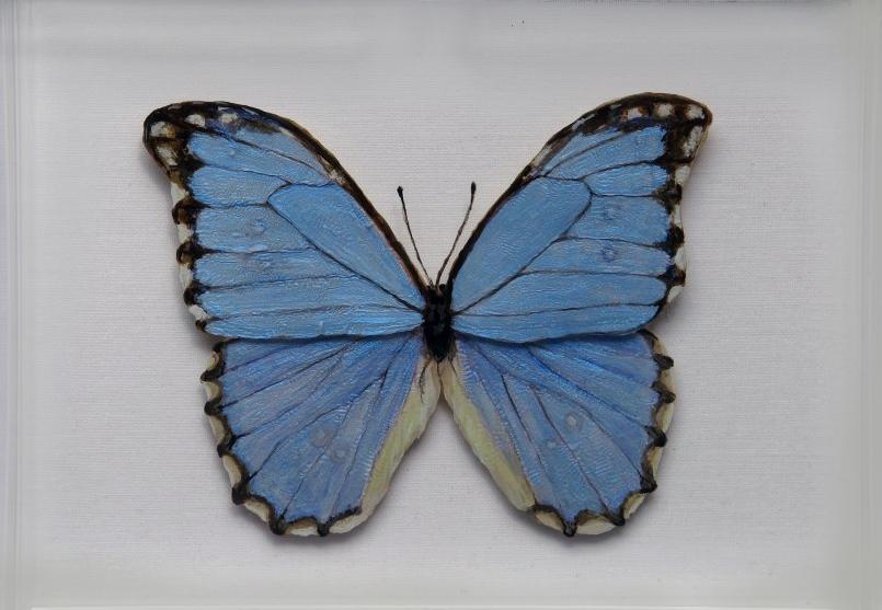Morpho Godarti Butterfly