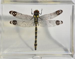 Death Dragonfly