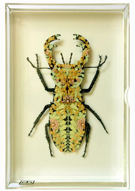 Floral Beetle