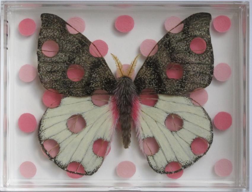Polka Dot Moth