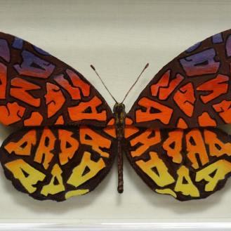 Sandra Butterfly