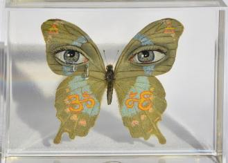 Pop Surrealist Butterfly
