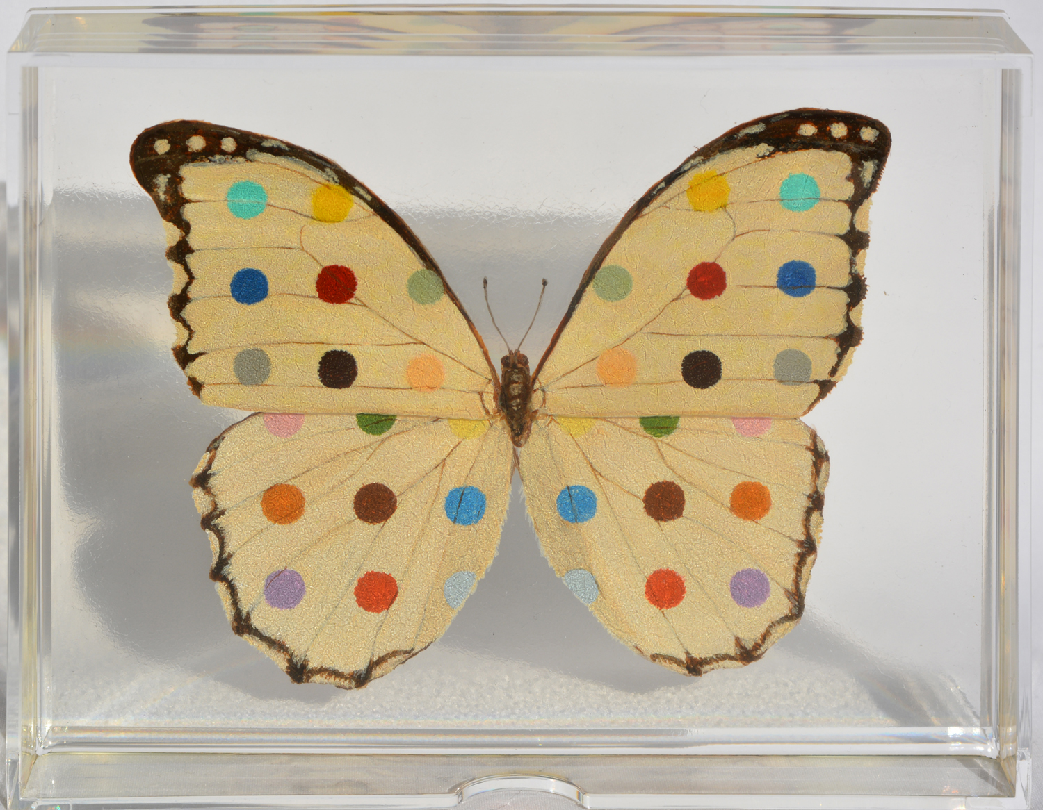Spotted white Butterfly