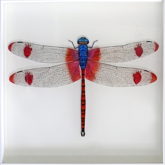 Heart-Winged Darter | Acrylic paint and resin | 50 x 50 x 5 cm